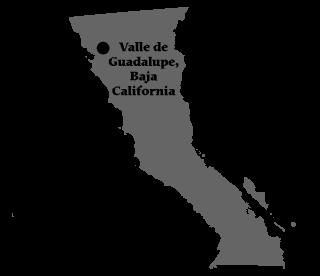 valle-de-guadalupe-baja-town